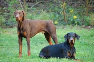 doggies1