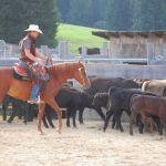 Rosaleda Qahria beim Cow Working
