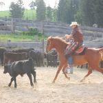 Rosi beim Cow Working